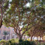 """Pasqualino Monti (AdSP): """"Intervento urgente sugli alberi di Sant'Erasmo"""""""