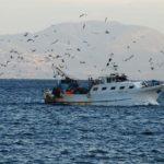 Variati i criteri di ripartizione del fondo di solidarietà della pesca