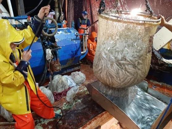 Conservazione del pescato, sperimentato nuovo tipo di ghiaccio dal Distretto Pesca - L'Avvisatore Marittimo