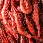 Preoccupa blocco pesca del gambero rosso nel Tirreno